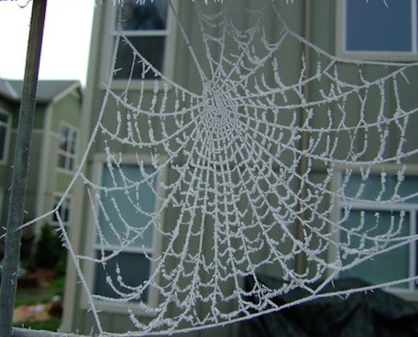 Icy spiderweb in January