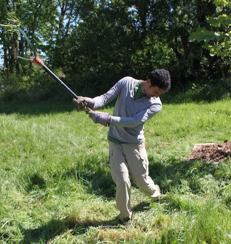 You can practice your golf swing while scything.