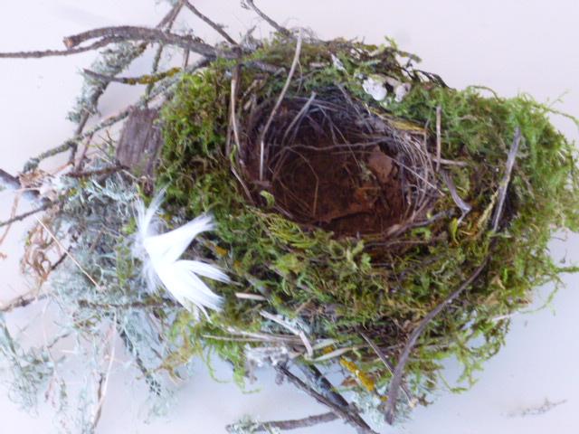 Swainson's thrush nest